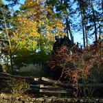 Eureka Springs foliage