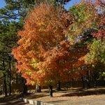 Fall Foliage in Eureka Springs