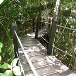 The 2-story catwalk in the nature preserve.