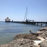 Iguana and pier