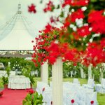Garden&Wedding