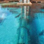 Atlantis - Shark pool