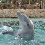 Atlantis Bahamas - Dolphin cove