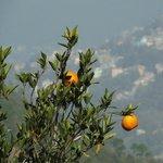 orange at sikim