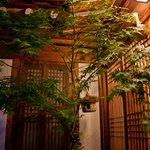 Beautiful Japanese Maple Tree