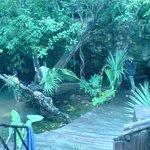 Gran Cenote, buceo maravilloso!