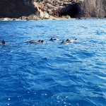 Spinner Dolphins off Lanai