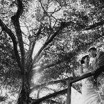 Beauiful Weddings