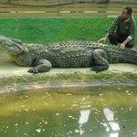 De oudste krokodil .