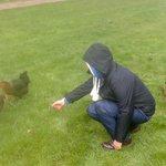 cheeky hens :)