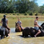 swimming with the horses