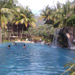 Treetop pool