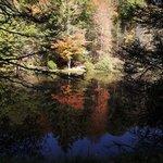 Seneca Lake - Seneca State Forest