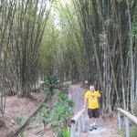Many bamboo species on the walks