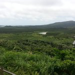 展望台からのマングローブ林