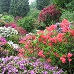 The Azalea Garden in full bloom (usually mid May)
