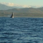 A humpback breaching on our way out to fish