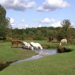 beautiful Burley Lawn
