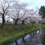 亀ケ池。お堀の名残。唯一桜が咲いてた