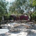 terrasse sous les oliviers