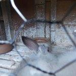 Animais mutilados (sem orelha) em ambiente extremamente sujo, paredes cheia de urina