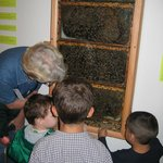 Visit our real live beehive!!