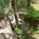 vue du jardin de la terrasse