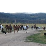 Bringing in the horses each morning