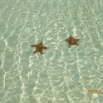 Nice clear water and starfish :)