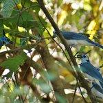 Aves en los alrededores de la Posada