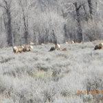 elk pride