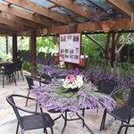 Lavender Hue Tea Room