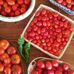 le nostre verdure bio