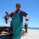 Crayfish in season