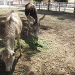 A mother and her young donkey, born a while before we visited.