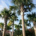 Beautiful palm trees everywhere