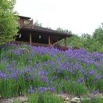 Terrace of iris