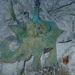 Octopus during night snorkel