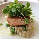 Salmon over risotto