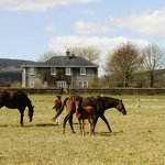 Stud Farm - Mares and Foals