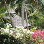There are only five bungalows in a large tropical garden