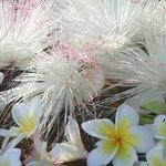 パームコーブビーチの花々