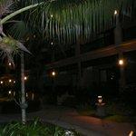 территория сада ночью