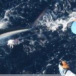 rare Spearfish