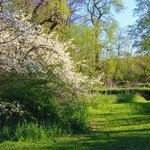 Spring Sarvis by the Creek