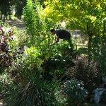Will in the garden
