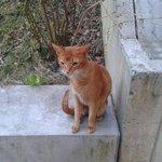 Gatico que nos visito todas las tardes en el jardín