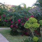 Underbara trädgården