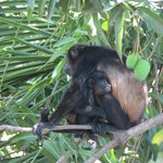 Mother & baby in mango tree