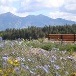 The Arboretum at Flagstaff Foto